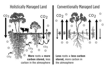holistic_management_comparison_diagram