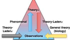 Thoery & Observation