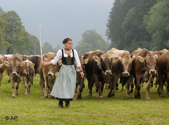Swiss Dairy