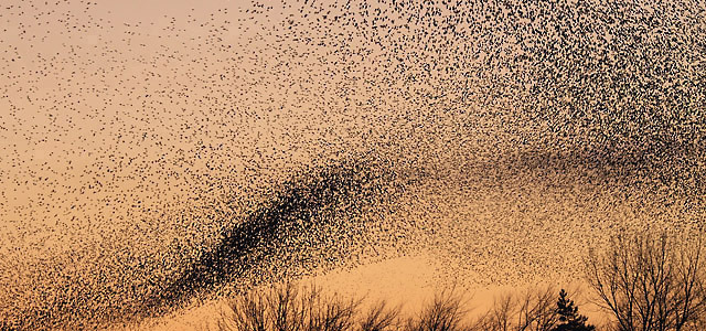 Complexity murmuration