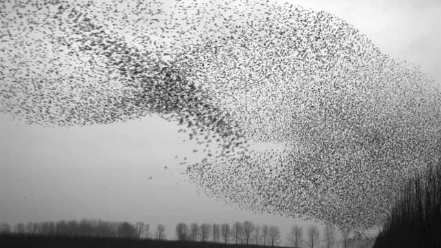 Ijken Art of Flying